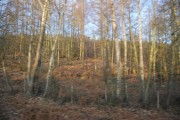 Snape Woodland in winter