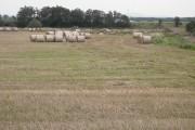 Round bales, Kersebrock