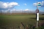 Harwell Tree Line