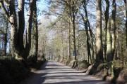 Tree-lined road, Upper Linhay