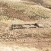 Sheep fank below Creag Thulach