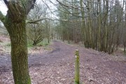 Woodland paths and  markers