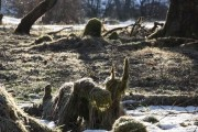 Tree stumps in woodland