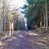 Cullernie Wood