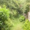 Daisy-strewn Path