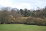 Woodland on the edge of Lamberhurst