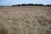 Towards Reddishaw Knoll Plantation