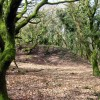 Woods on the Bincombe to Crowcombe road