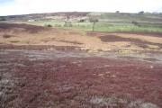 Across Trout Sike Ridge towards Hollow Meadows