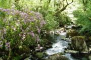 River Teign, Gidleigh Park