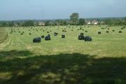 Lynes Farm