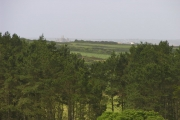 Conifers overlooking St Michaels Mount