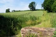 Wheat field near Basildon