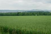 Oatfield near Mains of Gray