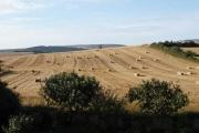 After the Harvest, West Charleton