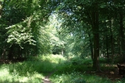 The Dover Woodland