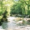 East Dart River at Dartmeet