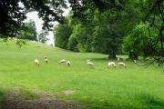Farmland From the Footpath near Quenington