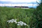 Bishopsteignton field