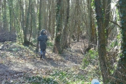 Park Wood, Near Hailsham, West Sussex