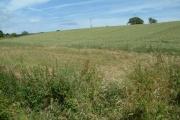 Farmland, Ottery St. Mary