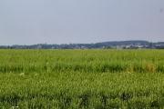 Mid Devon farmland