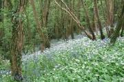 Staverton Wood