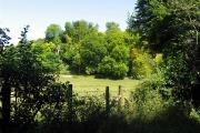 Farmland Along the Thames Path: Whitchurch-on-Thames