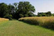 Farmland near Cane End