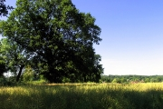 Rapeseed on Farmland near Whitchurch Hill
