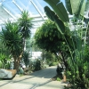 Tropical plants in Leamington Spa