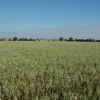 Farm land, Primrose Hill, Burtonwood