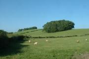 Farmland and wood, near Nether Kellet