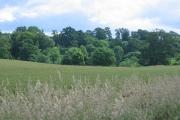 Farmland, Carrington.