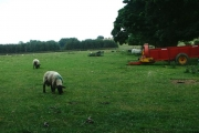 Grazing and Farm Machinery, Newbiggin Farm