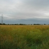 Wheat field, Burtonwood