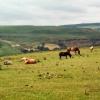 Ponies on Troed-y-rhiw mountain