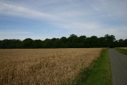 Hearse Wood, Great Saxham