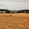 Trig points near Barrow in Suffolk
