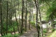 Woodland at the Falls of Bruar