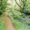 Hartland: Docton Mill leat above Lymebridge