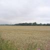 Corn Field and  Coroners Woods