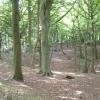 Bassett Wood
