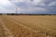 Stubble fields, Caldecote