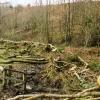 Meshaw: hedge laying