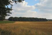 Higham Heath