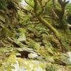Portmeirion: rocky landscape