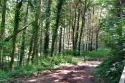 Woodland near Berry Pomeroy