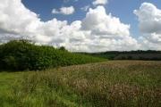 Rolling Suffolk farmland near Dalham