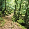 Meavy: path beneath the Dewerstone